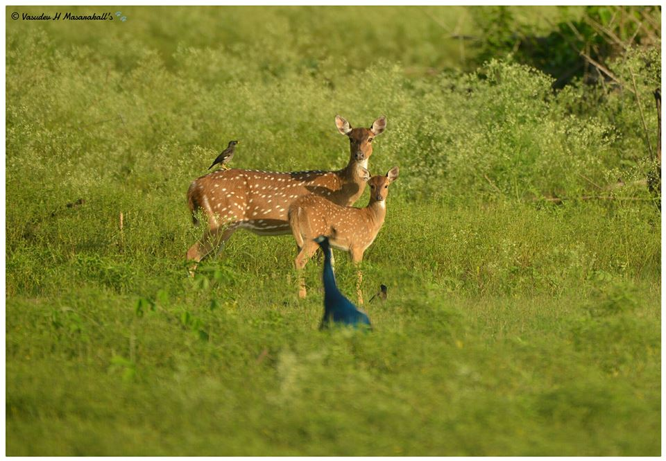 National Park vs Wildlife Sanctuary