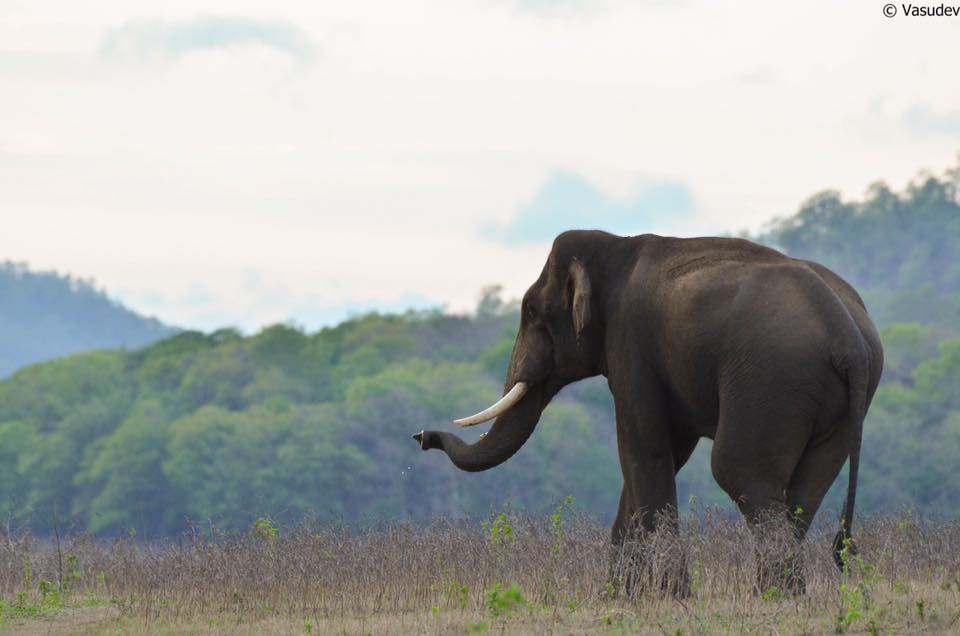 Bhadra Tiger Reserve Karnataka