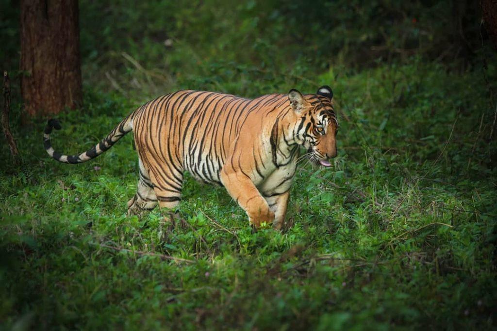 Kali Tiger Reserve Karnataka