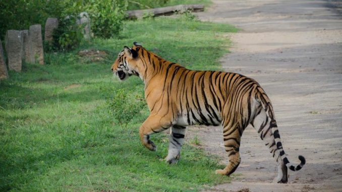 Nagarhole National Park and Tiger Reserve