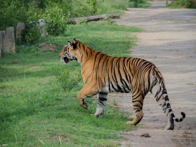 Tiger Reserve Karnataka