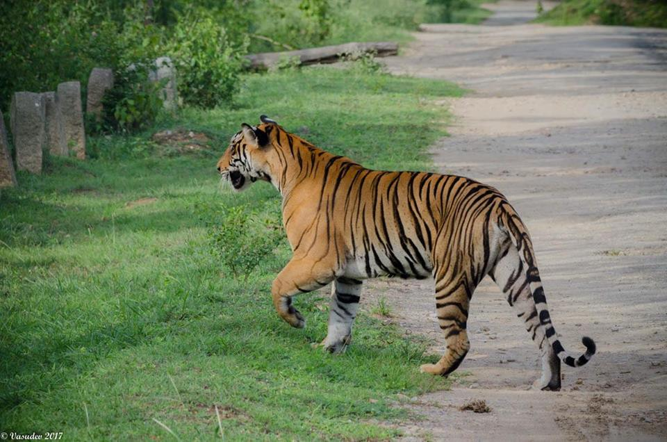 7 Best Tiger Reserves in South India