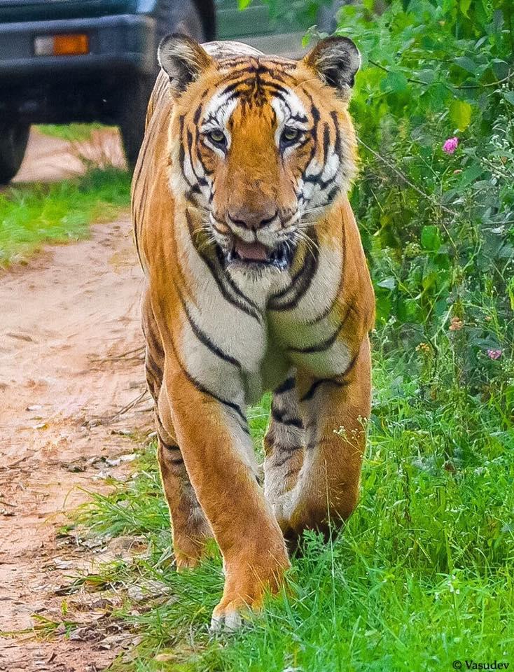 National Park vs Tiger Reserve