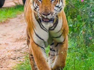 Tiger Reserve, Karnataka