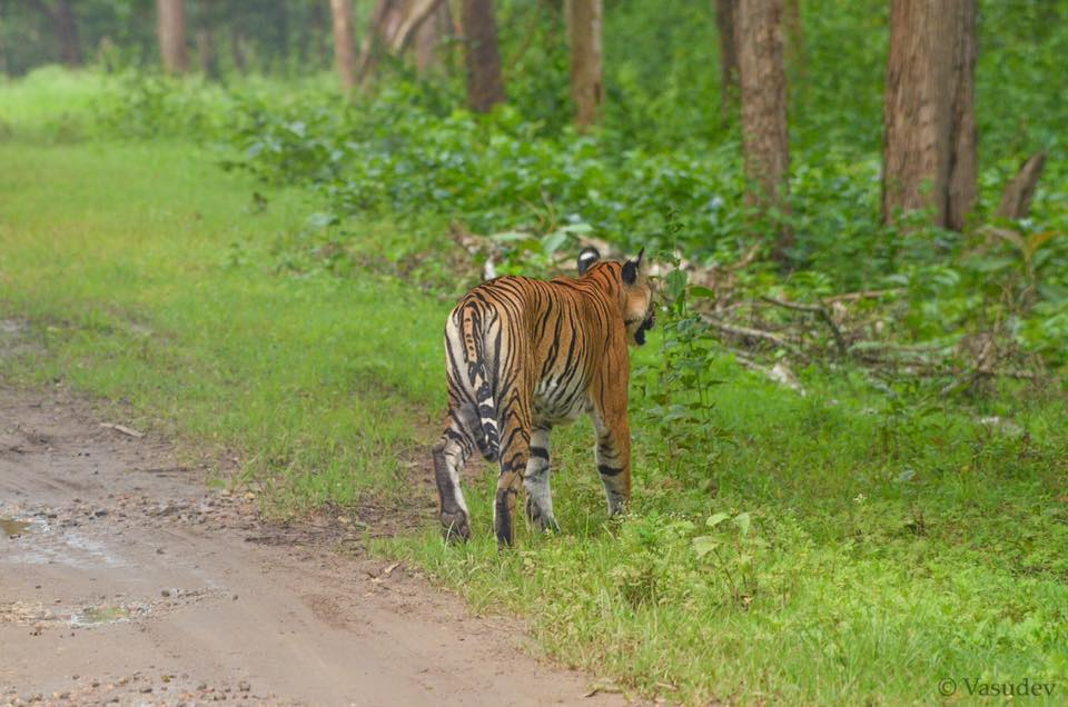 Nagarhole Tiger Reserve, Karnataka