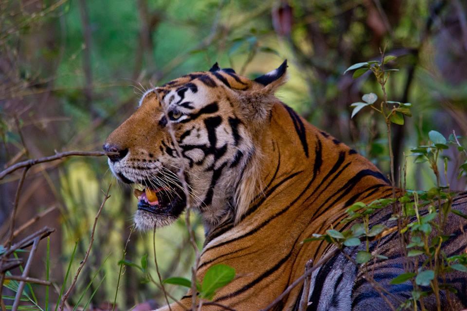 Kanha Tiger Reserve Madhya Pradesh