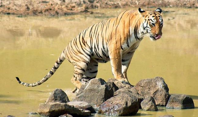 Panna Tiger Reserve - Madhya Pradesh