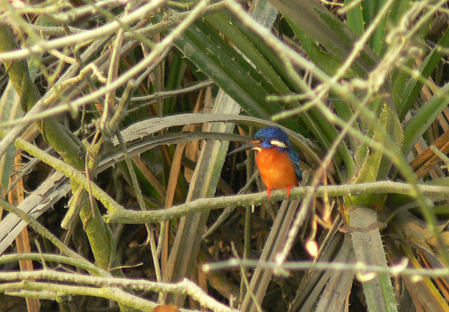 Sundarban National Park and Tiger Reserve