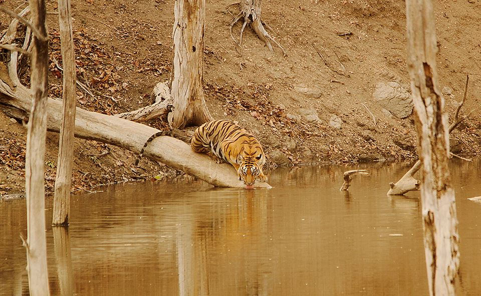 Tiger Reserve - Pench