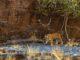 Ranthambore Tiger Reserve