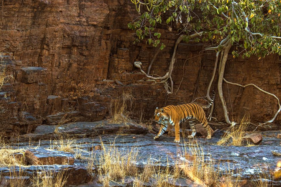 The Complete list of all (104) National Parks in India