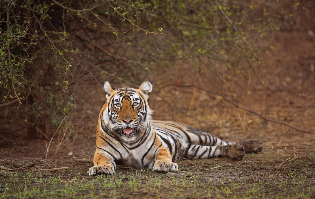 Sariska Tiger Reserve Rajasthan