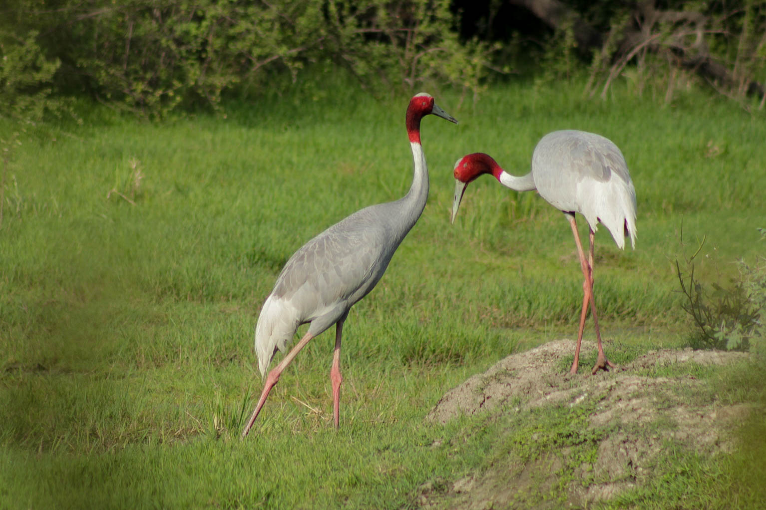 Keoladeo National Park – Bharatpur Bird Sanctuary