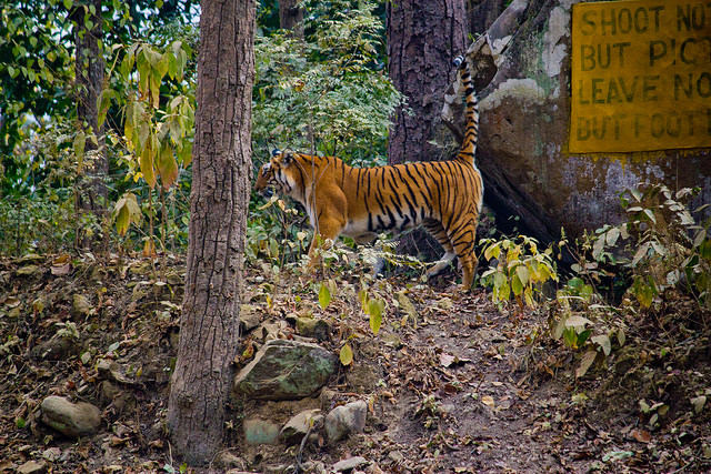Jim-Corbett-National-Park-India