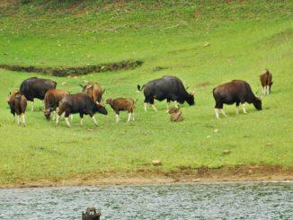Periyar National Park Travel Guide