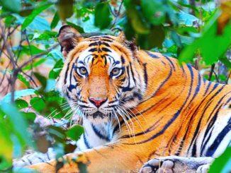 Sanjay Dubri Tiger Reserve