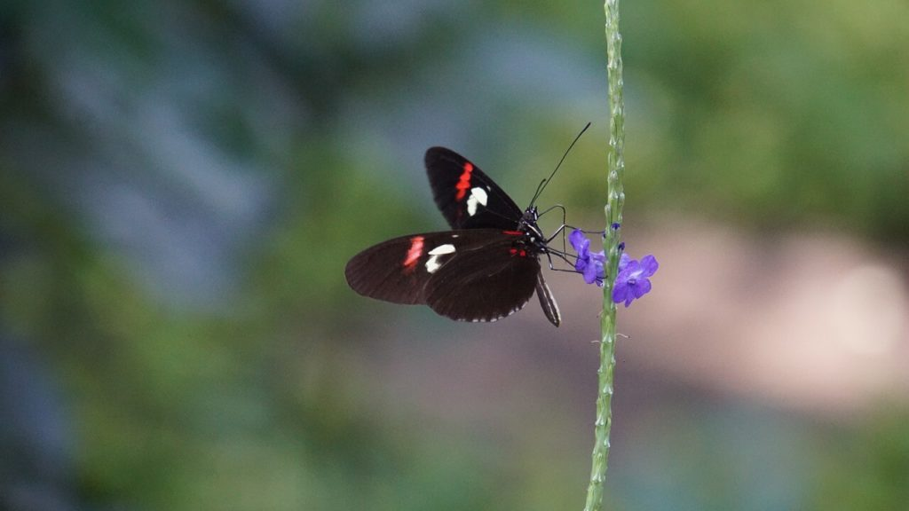 sundaland biodiversity hotspot