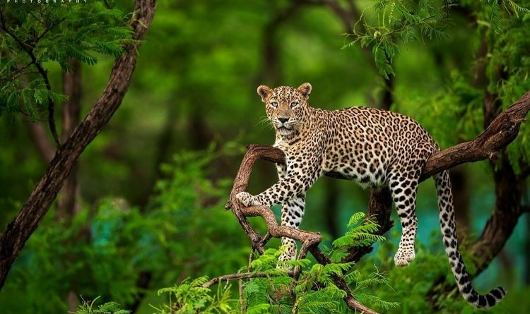 National Parks for Wildlife Photography