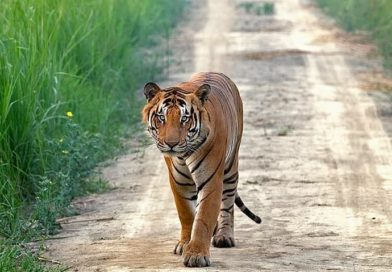 Dudhwa National Park and Tiger Reserve