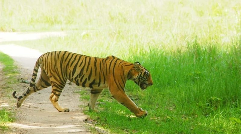 Project Tiger India
