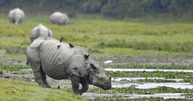 Endangered One-Horned Rhino
