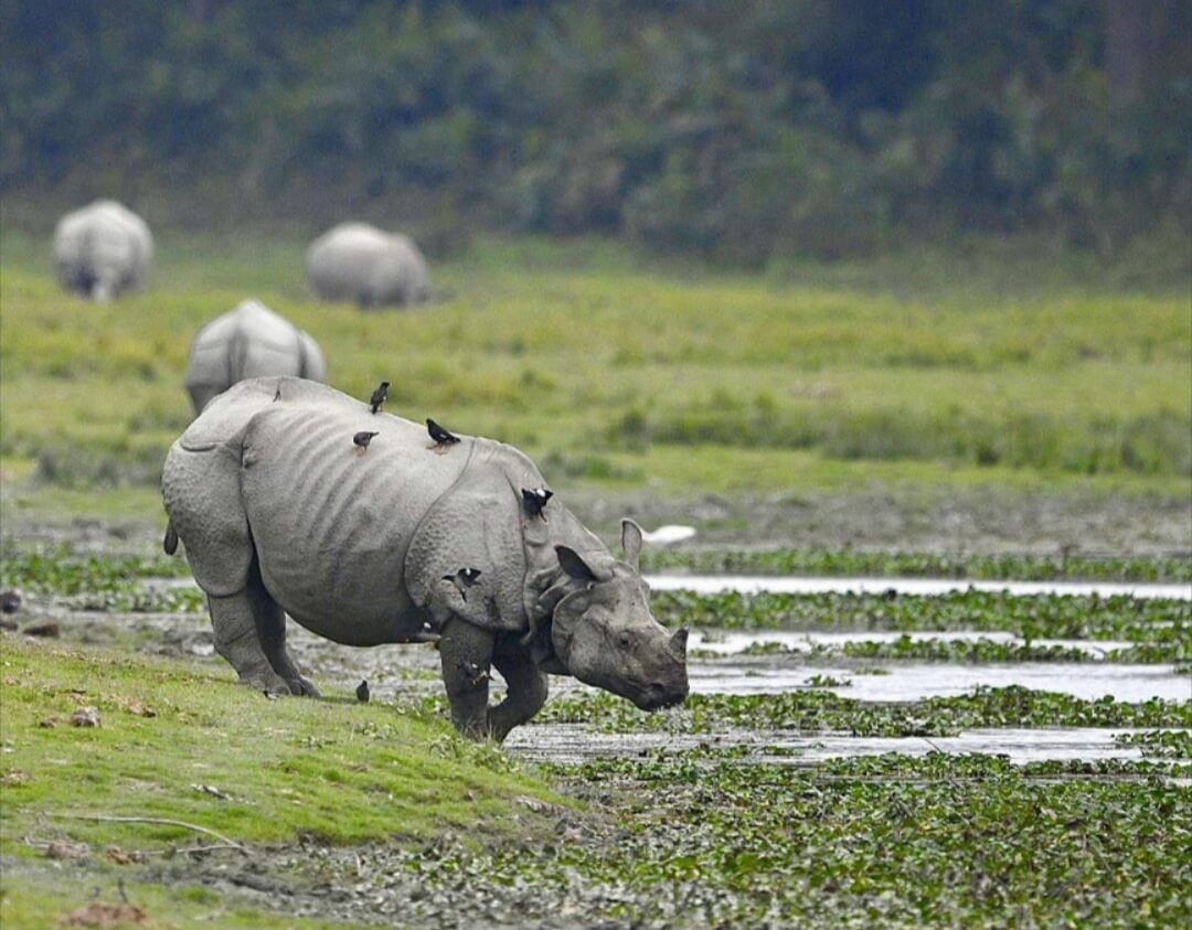 Most endangered wildlife species in India